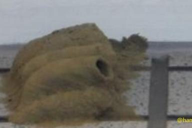 泥ハチの巣