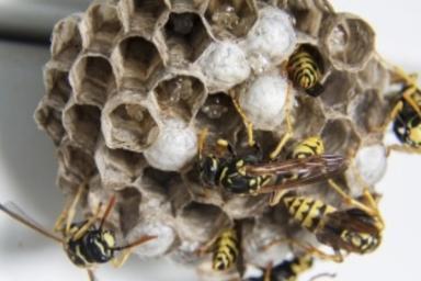 浜松市北区蜂の巣