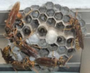 浜松市浜北区の蜂の巣