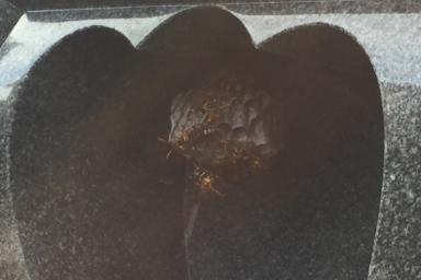 浜松市南区のアシナガバチの巣