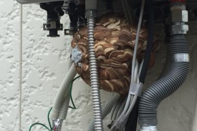 ガス給湯器の中のスズメバチ