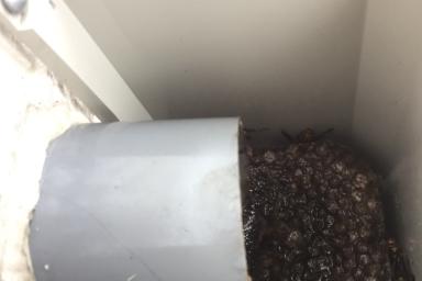 変な場所の蜂の巣