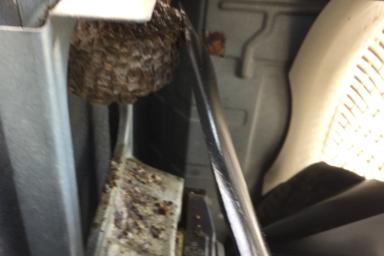 室外機の中のアシナガバチ