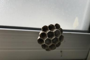 浜松市西区の蜂の巣