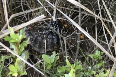 くるぶしの下あたりに巣を作るアシナガバチ