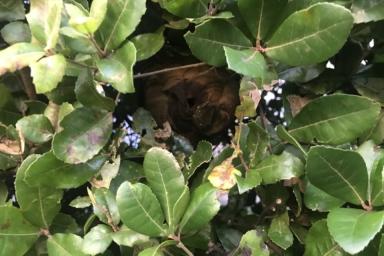 分かりにくい場所にあるスズメバチの巣