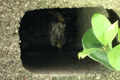 ブロックの中に巣を作るアシナガバチ