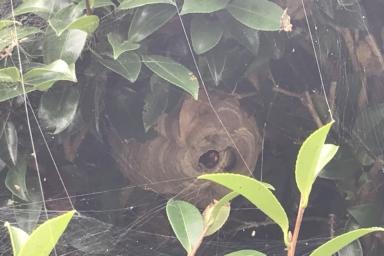 駐車場の扉の高さの場所に巣がありました