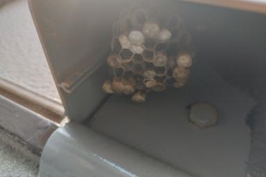 アシナガバチの巣がありました