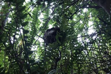 草むらの中のスズメバチの巣
