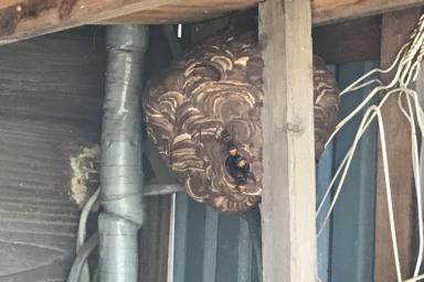 森町に作られたスズメバチの巣