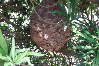 昨年に作られたスズメバチの巣