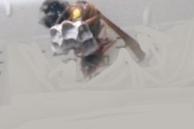 室外機に巣を作るアシナガバチ