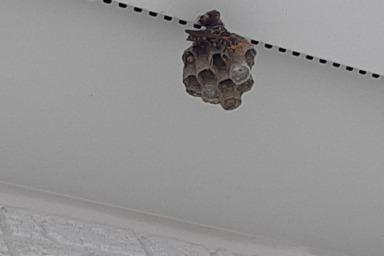 浜松市で軒下にできたアシナガバチの巣