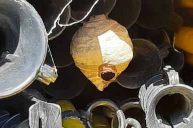 資材置き場に巣を作るスズメバチ