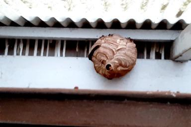 軒下にできたスズメバチの巣