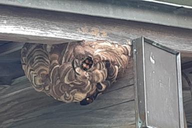 浜松市天竜区のスズメバチ駆除