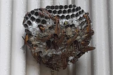 湖西市で外壁にできたハチの巣を駆除してきました