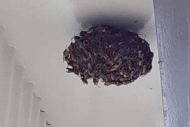 湖西市ハチの巣駆除